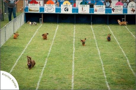 2013-April-weiner-dog-races-1---Copy---Copy